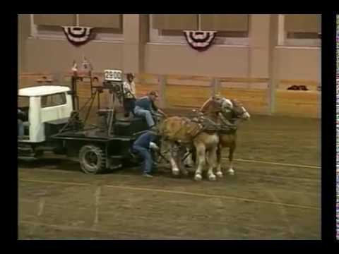 Runaway at Draft Horse Pull
