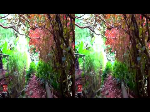 3D Video Beautiful Tropical Plants - Hawaii Nature Scene - 3D Video Everyday N°135