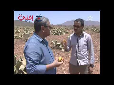 برنامج خاص عن موسم الصبار بمستي على قناة تمازيغت