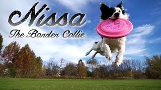 Border Collie Parkour Tricks