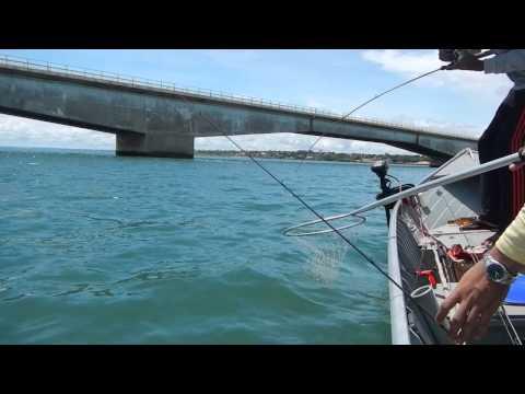 Pesca Dourado - Rio Paraná/Pres.Epitacio-SP - Marcelo Moreno