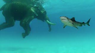サメとゾウ