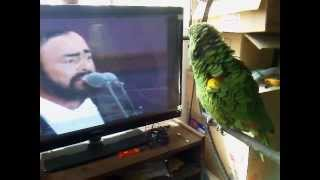 Loro Pavarotti