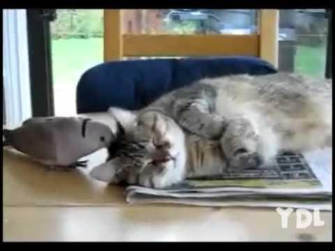 Zvláštní kočičí budíček! :D