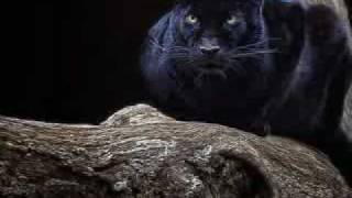 Black Panther-Pantera Negra(video Tributo)