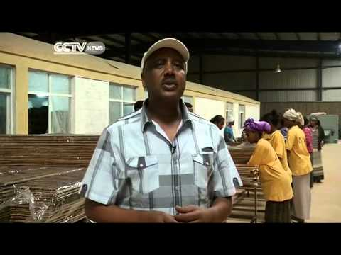 Ethiopia Cashes in on Bamboo