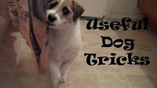 Useful Dog Tricks