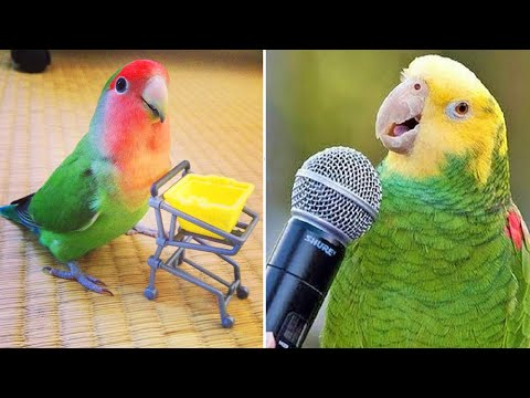 Baby Animals 🔴 Funny Parrots and Cute Birds Compilation (2019) Loros Adorables Recopilación #4