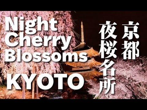 京都観光・夜桜のライトアップの名所(yozakura) Cherry blossom evening spots in Kyoto 清水寺、二条城、祇園白川、東寺、円山公園 桜便り