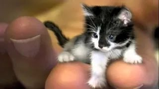 WORLD'S SMALLEST CAT 2015