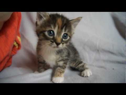 talking cats cat meowing funny cats videos kitty cats cute cats