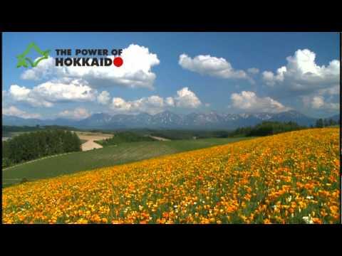 【The Power of Hokkaido】hokkaido_summer_flowers