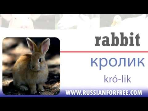 Russian vocabulary: Farm animals