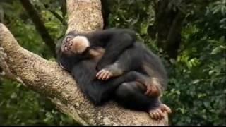 Sierra Leone Tourism Video