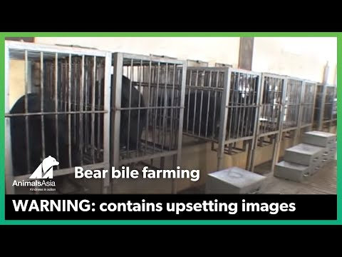 Animals Asia - End Bear Farming