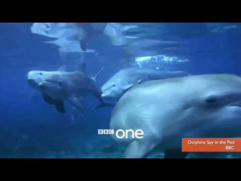 Dolphins Get High on Puffer Fish Toxins