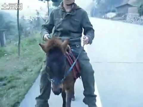girl fucking donkey show