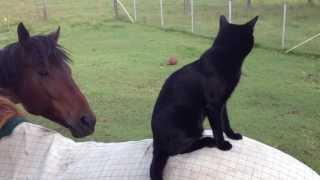 Kucing ini anteng menaiki kuda