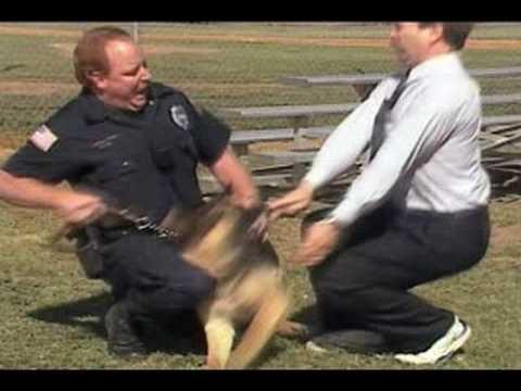 Untamed and Uncut: Attack Dog Bites Reporter