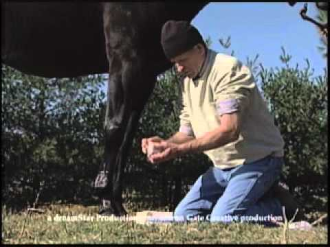 When & How to Use Cool Cast Bandages for Horse Leg Inflamation, Swelling, Tenderness