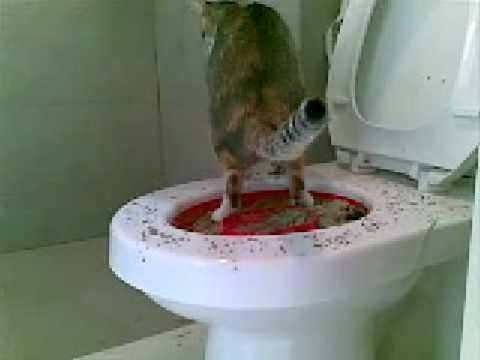Cat litter over toilet
