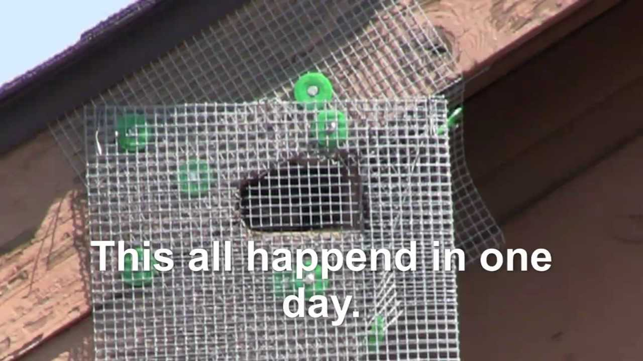 5 Homemade Squirrel Exclusion Device Works Much Better