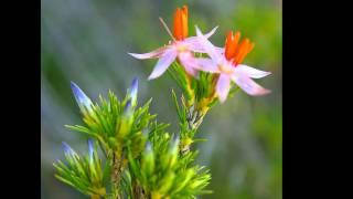 Australian Flora HD 1080