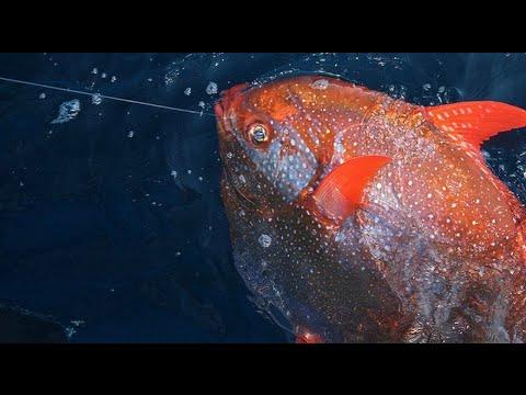 Phát hiện loài cá máu nóng đầu tiên trên hành tinh