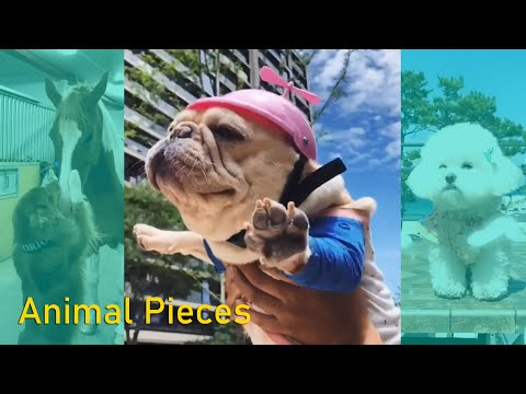 Funny Dog Vines Try not to Laugh 2019 Animal Videos | Funny Pet Compilation