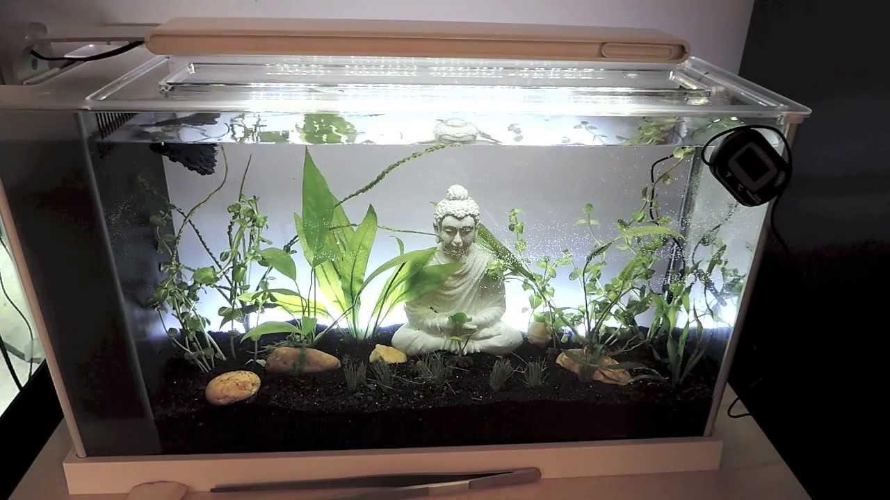 Fluval Spec 5 Gallon Aquarium Review Youtube