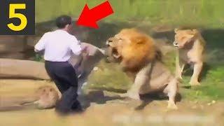Top 5 DUMBEST Zoo Guests