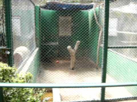 Elián en el zoológico