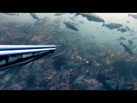 Spearfishing Norway Springtime