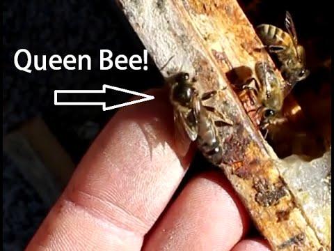 Beekeeping with Cody 2016: Bee Update July
