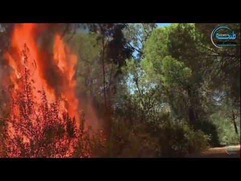 طنجة.. حريق بغابة مديونة