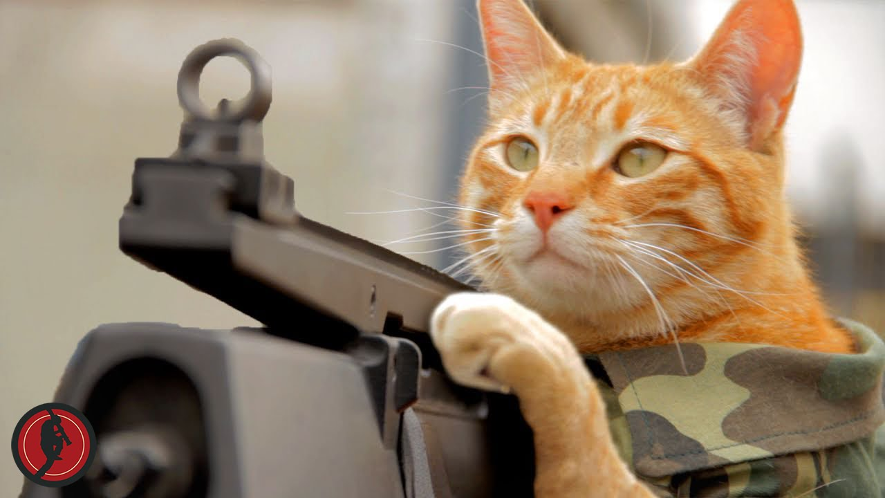 cat machine gun