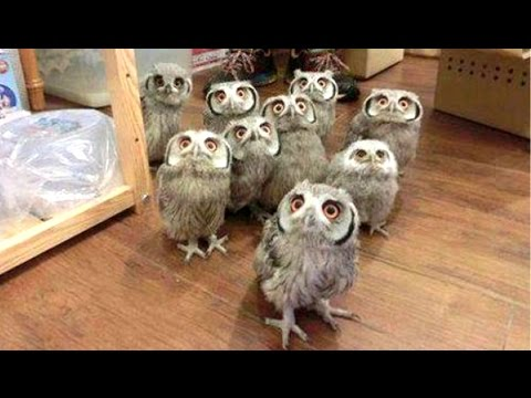 Owl - A Funny Owls And Cute Owls Compilation || NEW