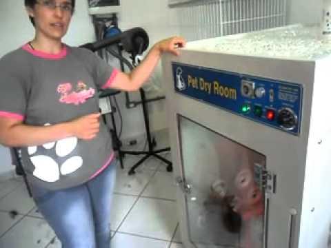 Pet shop tchula 39 s apresenta m quina de secar cachorros for Maquina de segar