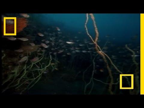 Strane creature di mare giapponesi