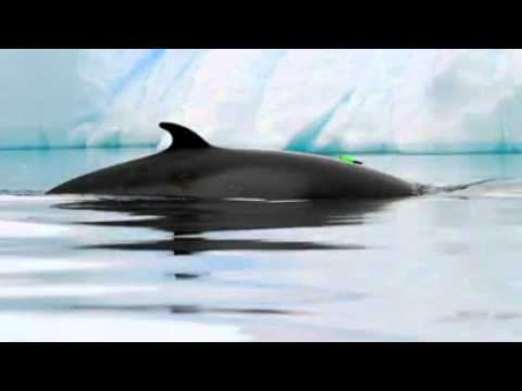 Mysterious Duck Like Ocean Sound Source Revealed  Video  LiveScience 2