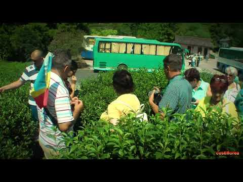 Hangzhou National Tea Museum - Trip to China part 40 - Full HD Travel Video