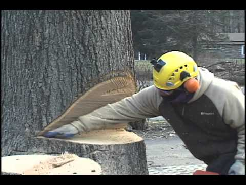 Big Tree Removal Devon PA.mov