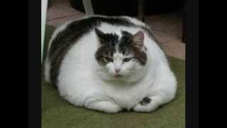 Funny Pictures Ep.1 Fat Cats + Fat Dogs
