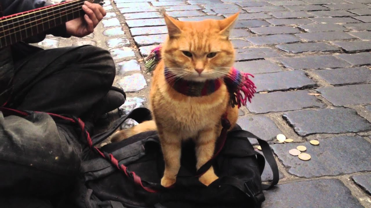 Big Issue Cat Named Bob