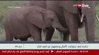 دراسة لرصد سلوكيات الأفيال وحمايتهم