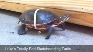 亀にローラーつけてあげると結構速く動ける
