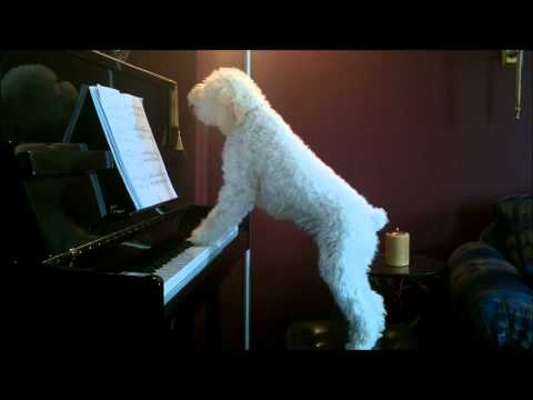 Dog Playing Piano and Singing