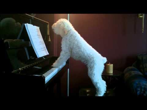 Tucker piano Dec 7'2010.wmv