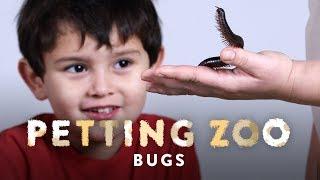 Bugs   HiHo Petting Zoo