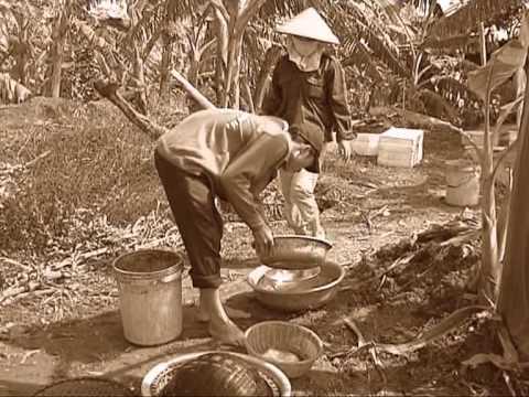 Giật mình nhớ về Hải Dương thưởng thức chả rươi - Tản văn Nguyễn Đình Vinh